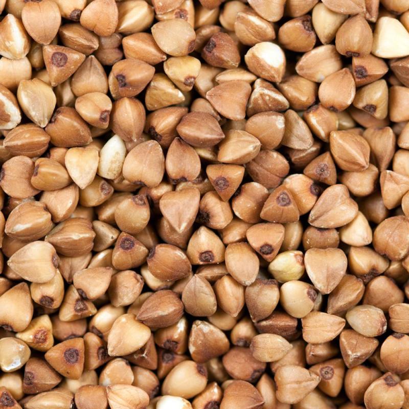 Cheap Buckwheat  for sale
