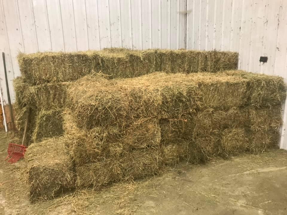 Grade A Alfalfa Hay / Timothy Hay /Animal Feed / Alfalfa Hay pellets for sale