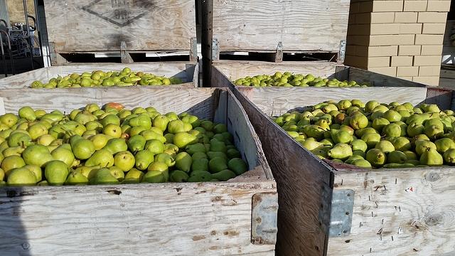 Buy Fresh pear
