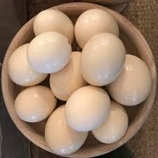Available Ostrich Fertile Eggs