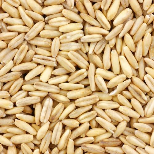 Quality Oats Grain The thick outer hull of the oat has been removed and the slender in size oat groat has been stabilized for human consumption. Oats can be milled in a variety of forms that include oat flour, regular oats, quick oats, and thick oats. Oat