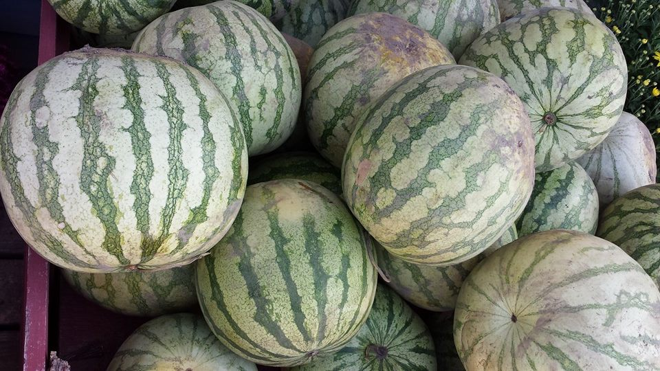 Buy  Fresh Water Melons