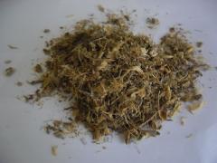 Sceletium tortuosum tea cut