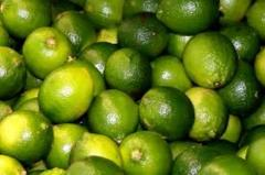 Fresh Lemon / Lime