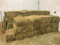 Grade A Alfalfa Hay / Timothy Hay /Animal Feed / Alfalfa Hay pellets for sale