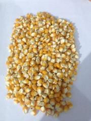 Yellow Corn & White Corn/Maize