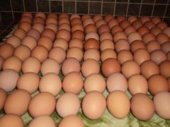Fresh White and Brown Eggs