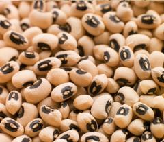 CHEAP BLACK EYED BEANS FOR SALE