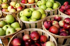 Cheap quality fresh  apples  for sale