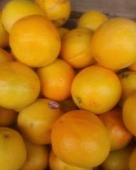 Fresh Valencia oranges