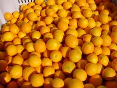 Naval oranges