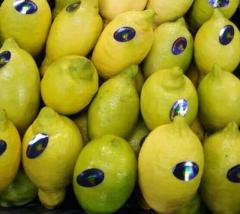 Adalia lemon