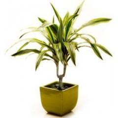 Leafy green plant in a pot