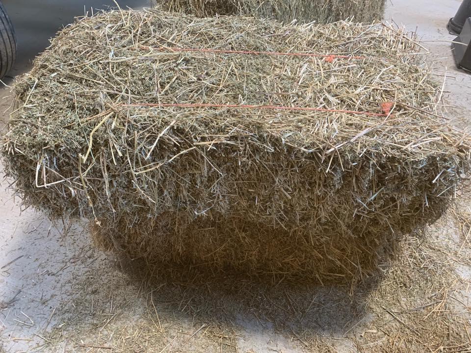 grade_a_alfalfa_hay_timothy_hay_animal_feed