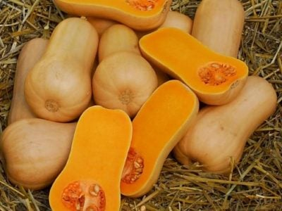cheap_butternuts_of_all_varieties_for_sale